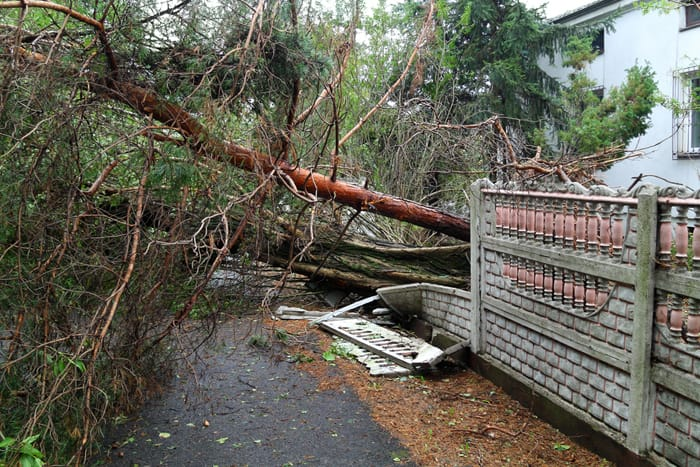 fallen tree into property