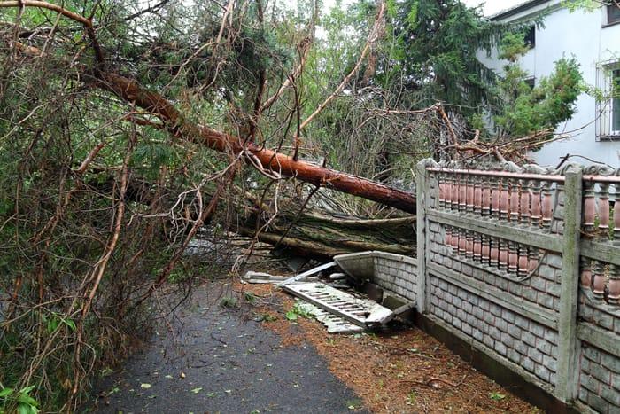 fallen tree into property